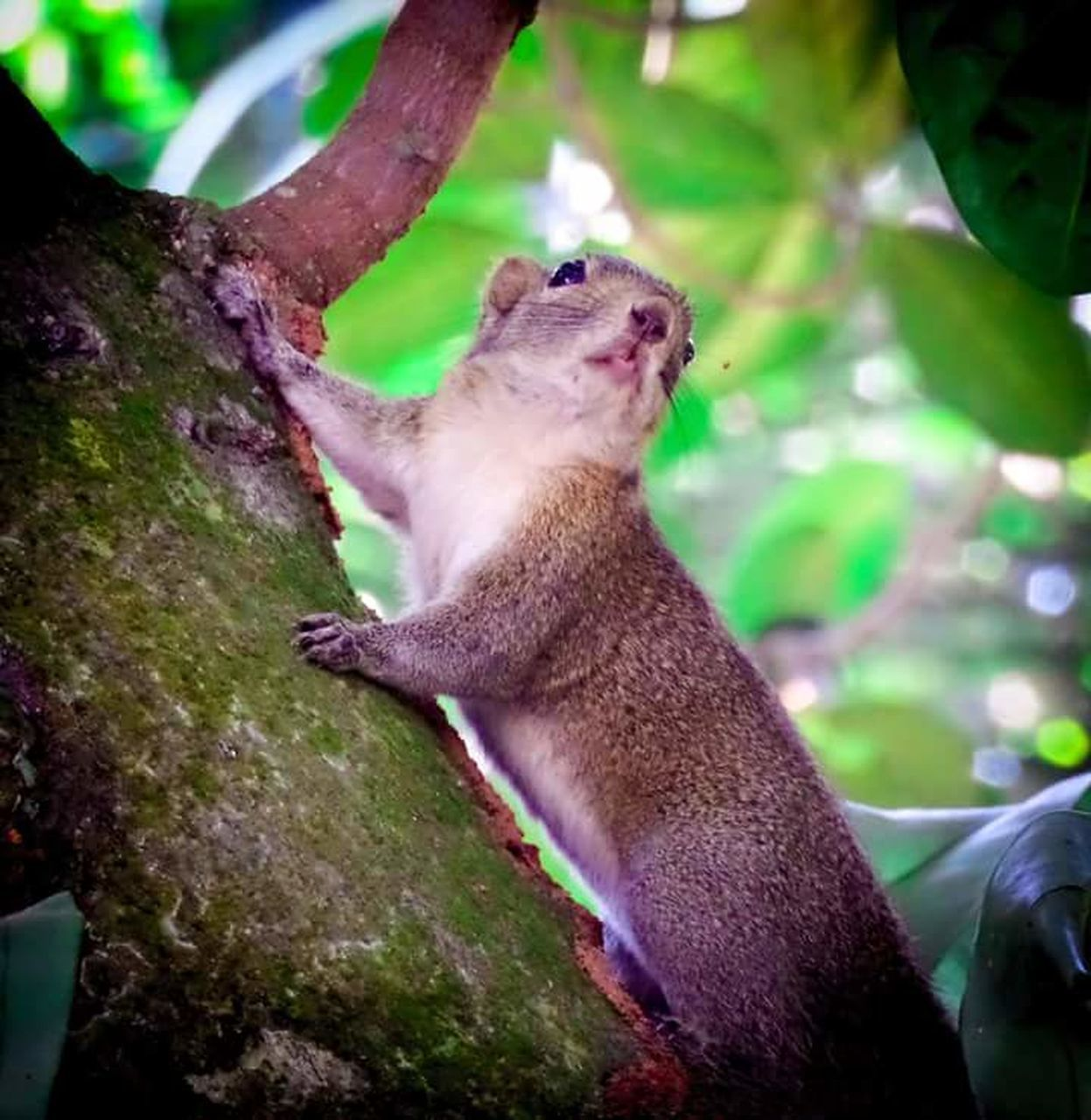 animals in the wild, animal themes, one animal, no people, day, tree, mammal, outdoors, nature, animal wildlife, squirrel, sitting, close-up, koala