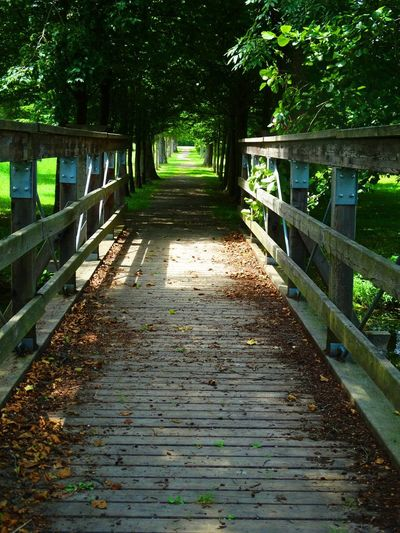 Beauty In Nature Bridge Bridge - Man Made Structure Day Footbridge Forest Nature Outdoors Railing Steps And Staircases The Way Forward Tree
