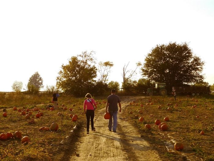 Photographybybrookechanelle Rear View Walking People Pumpkinpatch Pumpkins Fall Fall Collection Authentic Moments Autumn Father And Daughter Family Time Hayride