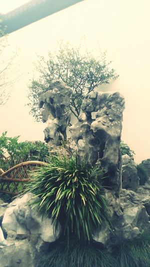 老城区的假山有如沉睡千年马高族的巫女召唤神龙 苏州的天空