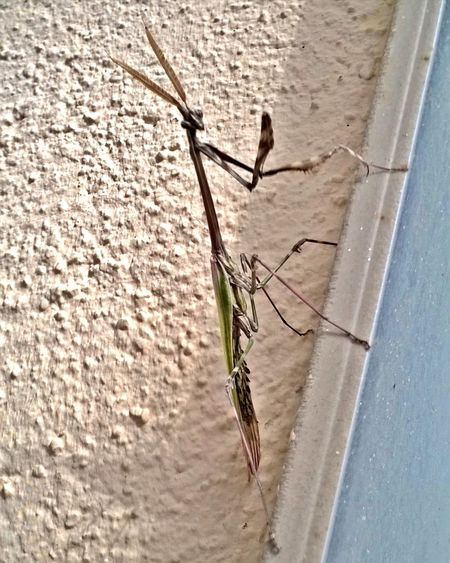 Mantis Mantis Religiosa MantisReligiosa Insect Photography Insects  Insects Collection B&w Nature EyeEm Gallery EyeEm Nature Lover HRD_colletion