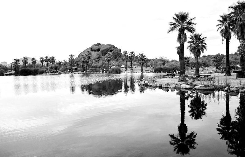 Tree Reflection Palm Tree Water Outdoors Silhouette No People Blackandwhite Black & White Hiking Beauty In NatureContrast High Contrast Mirror Effect Arizona