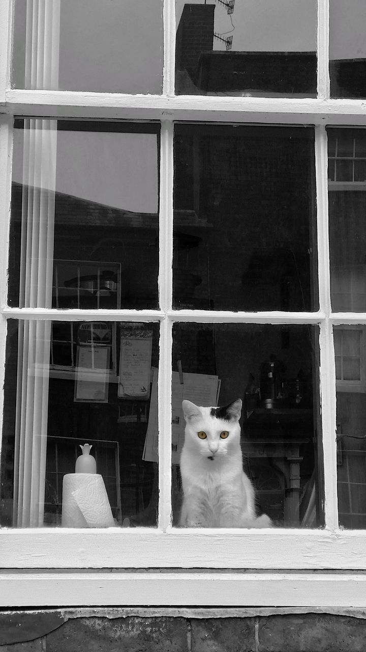 domestic, pets, window, animal themes, domestic animals, one animal, mammal, animal, cat, glass - material, feline, domestic cat, vertebrate, no people, transparent, building exterior, built structure, architecture, sitting, day, whisker
