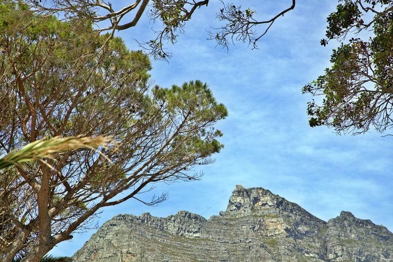 Sky Tree Plant Mountain Beauty In Nature Tranquility Tranquil Scene No People Scenics - Nature Non-urban Scene Mountain Range Environment Formation Outdoors Idyllic Low Angle View Table Mountain