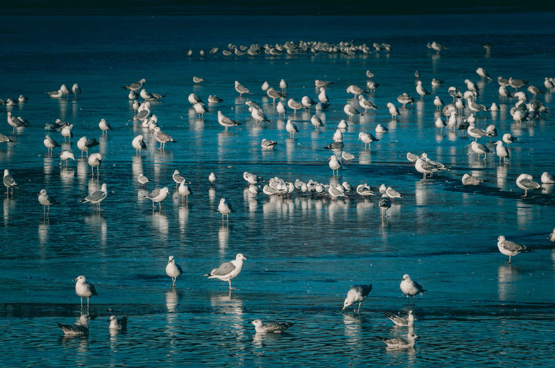 Animal Themes Animal Wildlife Animals In The Wild Beauty In Nature Bird Blue Cold Cold Days Cold Temperature Cold Winter ❄⛄ Frozen Lake Large Group Of Animals Nature Seagull Seagulls Seagulls In The City Water