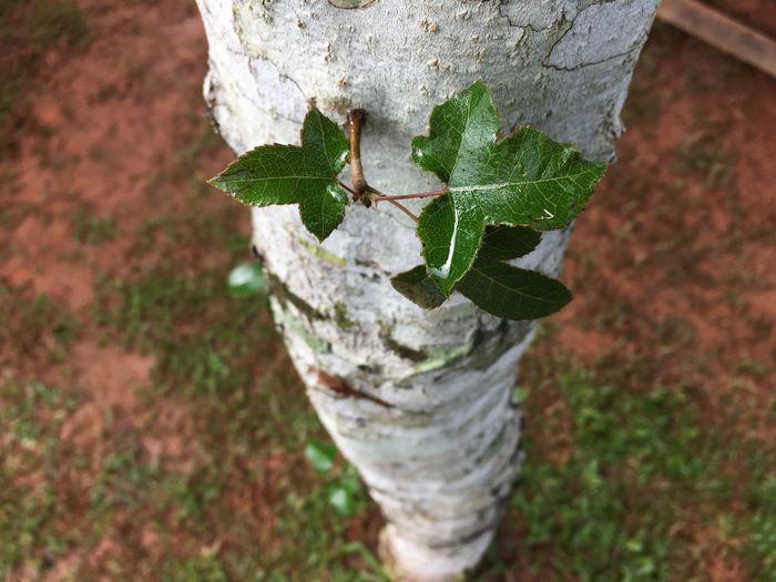 Plant Leaf High