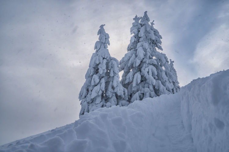 Snowcapped spruces Cold Temperature Winter Snow White Color Beauty In Nature Tranquil Scene Tranquility Sky Environment Glacier No People Landscape Nature Frozen Ice Scenics - Nature Cloud - Sky Day Covering Extreme Weather Iceberg Snowcapped Mountain Mountain Peak Spruce Tree Alps Tyrol Austria Winter