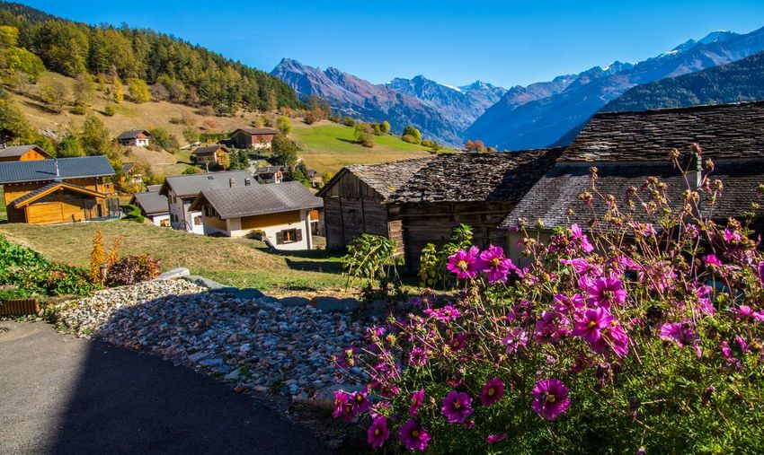 levron,valais,swiss Mountain Plant Architecture Building Exterior Beauty In Nature Flowering Plant Built Structure Building House Flower Nature Mountain Range Sky Scenics - Nature Tree Landscape Day No People Growth Residential District Outdoors Cottage Chalet