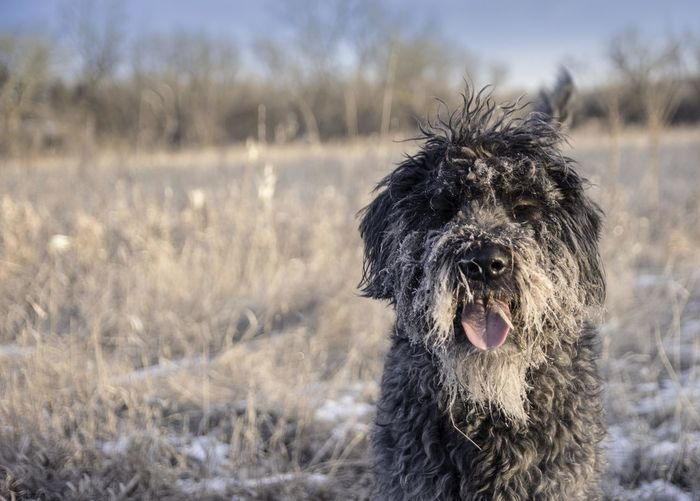 Portrait of dog on field during winter