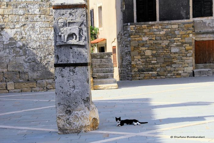 Il leone marciano e il gatto Buie Istria Istrie Istra Leone Marciano Buje
