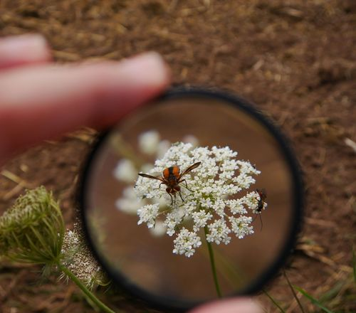 Under the lense.... Multiple Layers The Five SensesEyeEm Nature Lover Our Planet