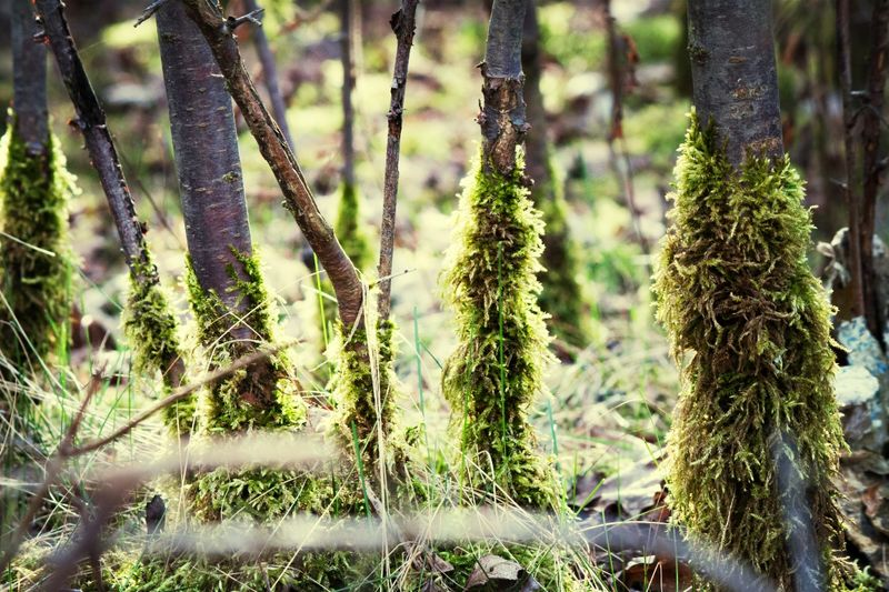 funny TreePorn covered with Moss in Nature