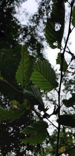 Im Wald 🌳