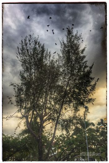 Firely Tree Tree Sky Nature Cloud - Sky No People Bird Outdoors Day Animal Themes Beauty In Nature