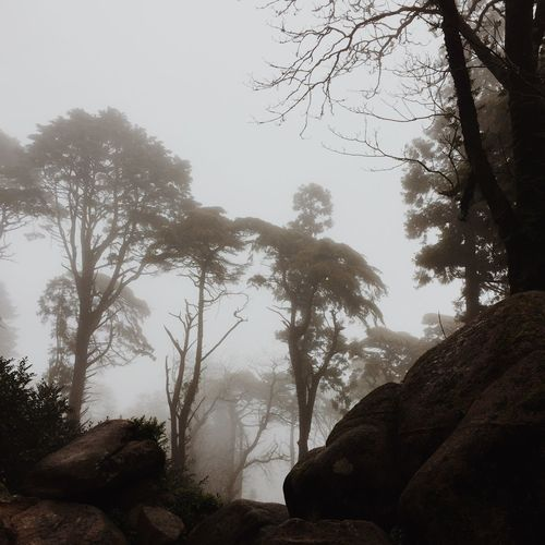 Foggy trees in a forest close to Sintra, Portugal. Beauty In Nature Day Fog Foggy Foggy Day IPhone IPhoneography Landscape Magical Magical Trees Mobilephotography Mountain Nature No People Outdoors Portugal Scenics Silhouette Sintra Sky Stones Travel Tree Tree