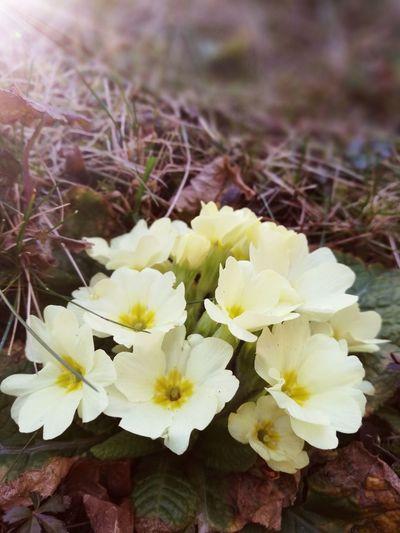 Flower Spring
