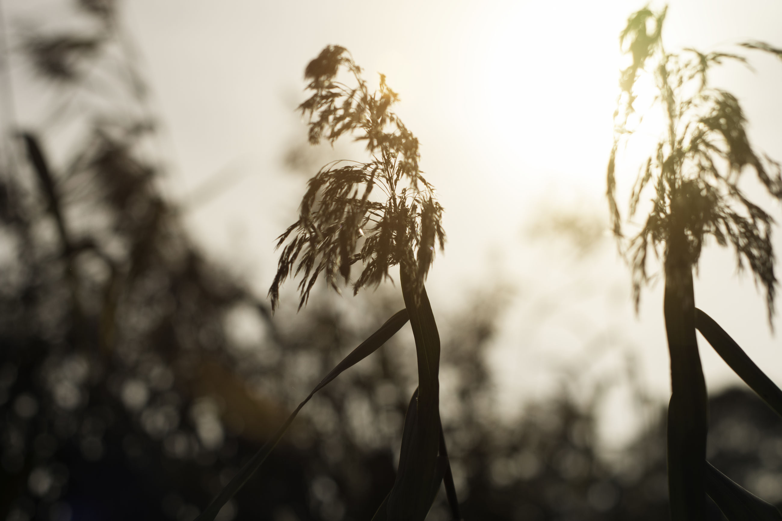 nature, growth, plant, focus on foreground, no people, outdoors, close-up, flower, low angle view, fragility, tranquility, beauty in nature, sky, day, dried plant, wilted plant