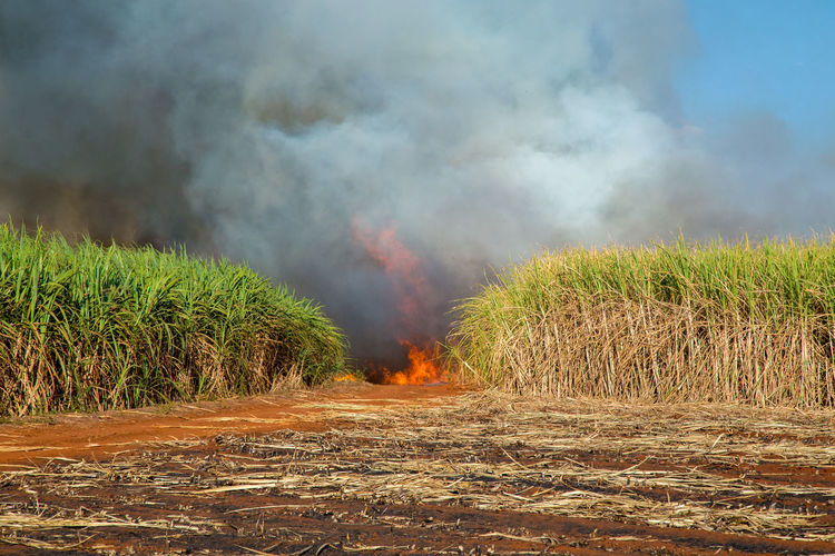 Fired Agriculture Air Pollution Beauty In Nature Burning Day Environment Environmental Issues Field Fire Fire - Natural Phenomenon Flame Growth Heat - Temperature Land Landscape Nature No People Outdoors Plant Pollution Power In Nature Rural Scene Sky Smoke - Physical Structure Sugar Cane Field