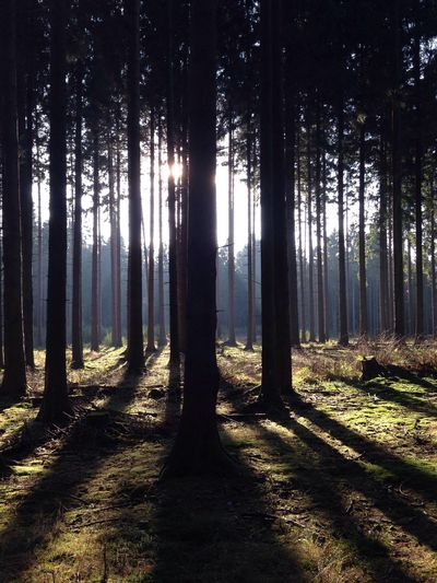 Forest in sunlight