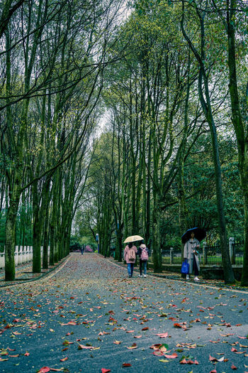 Day Leaf Nature Outdoors Real People Scenics The Way Forward Togetherness Tree