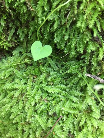 Green Color Plant Growth Leaf Plant Part Nature Close-up No People Beauty In Nature Day Selective Focus High Angle View Outdoors Fragility Freshness Vulnerability  Tranquility Land Botany Green Clover
