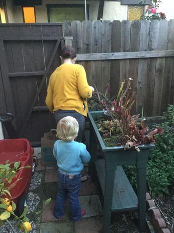 Violet & Mama work on carnivores 13048553