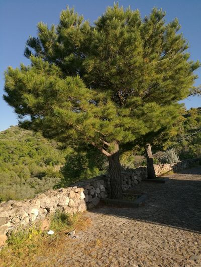 Abandoned Panoramic Photography Stones Nature Sardinia,italy Trees Nature Photography Nature Beauty Abandoned Places Town City Gosthtown Beauty In Nature Nature Collection Sardinia Sardegna Italy  Tree Nature_ Collection  Naturephotography