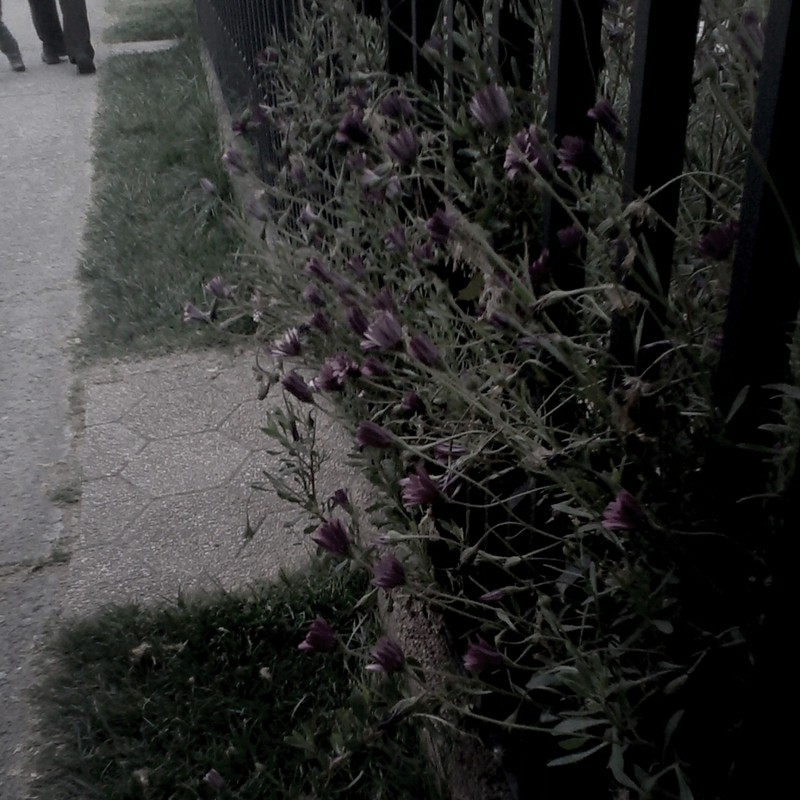 growth, plant, flower, nature, leaf, tree, outdoors, day, no people, sunlight, front or back yard, tree trunk, growing, high angle view, shadow, built structure, grass, branch, footpath, fence
