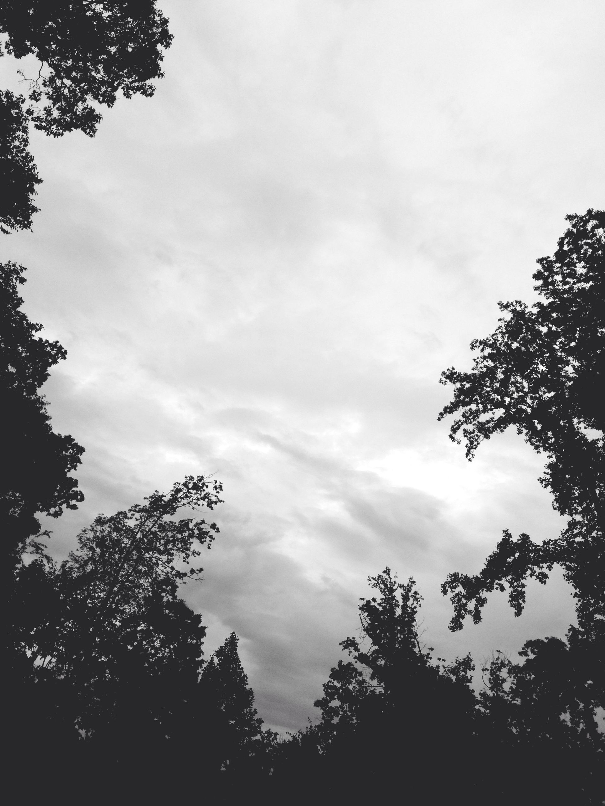 tree, low angle view, sky, silhouette, tranquility, beauty in nature, nature, growth, branch, cloud - sky, scenics, tranquil scene, treetop, cloudy, high section, outdoors, cloud, no people, forest, idyllic