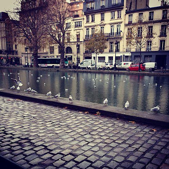Eau Water Mouette Oiseaux Birds Canal