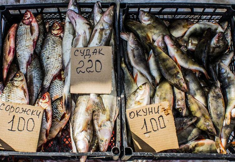 Abundance Animal Themes Business Day Dried Fish  Fish Fish Market Fishing Industry Food Food And Drink For Sale Freshness Healthy Eating Ice Market Market Stall Metal Grate No People Outdoors Price Tag Raw Food Retail  Seafood Squid Text