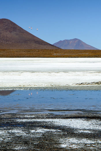 Flamingo Travel Beauty In Nature Day Idyllic Lagoon Land Landscape Mountain Nature No People Non-urban Scene Outdoors Remote Salt Flat Scenics - Nature Sky Tranquil Scene Tranquility