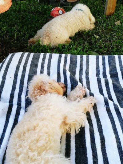 Domestic Animals Pets Sleeptime😴 Freespirit Freeday