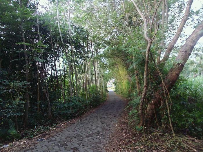 The Beautiful hallway Alone Sunshine Village View Point Of View Footpath Dusk Freshair Onfoot Tree Tree Trunk Forest Branch Grass Sky Green Color Bamboo Grove Grove Bamboo Bamboo - Plant Woods