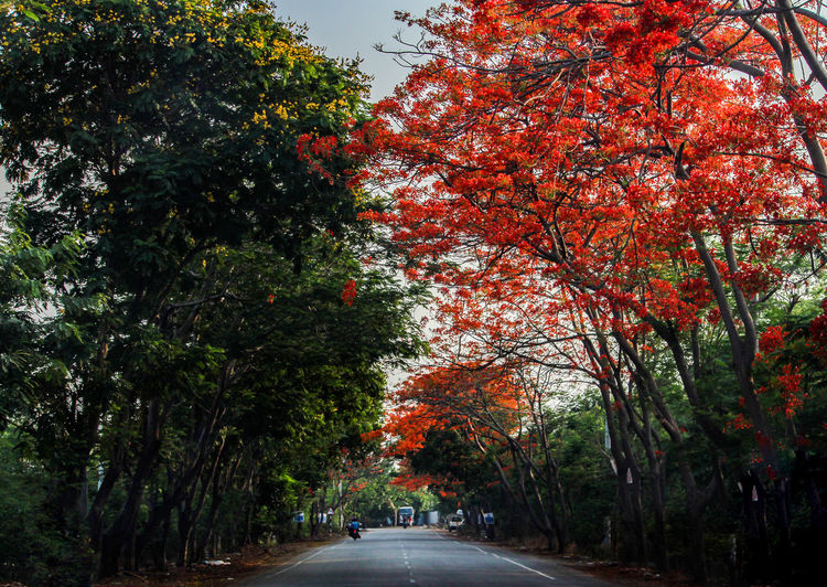 Nature Red Road