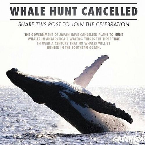 Rejoice in the safety & well being of the Defenseless & the Voiceless Betheirvoice DoTheRightThing TakeAStand GreenPeace PETA AnimalHalocaust Vegan Vegetarian MakeTheConnection TheCove AnimalRights SeaShepherd OceanConservancy MakeAChoice @TerraMarProject