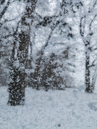 Window Close-up No People Day Backgrounds Full Frame Outdoors Nature Trees Face In The Trees Snow Winter Wintertime Cold Temperature Cold Weather Cold Cold Days Water Car Window Illusion Natures Faces Snowflakes Snow Day Snow Covered Forest