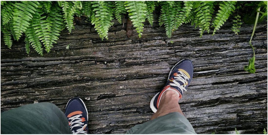 Walking walk in the park Jungle Road