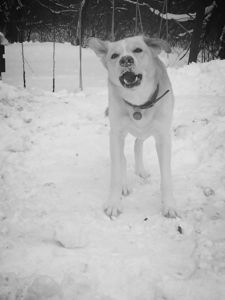 Animal Themes Dog One Animal Mammal Pets Domestic Animals Field Portrait No People Winter Day Cold Temperature Outdoors Nature