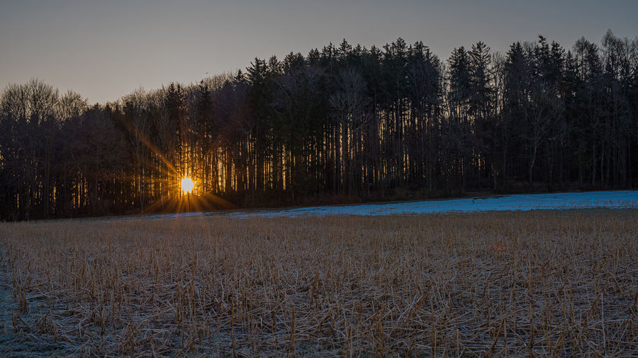 Sonnenstrahlen Sonnenaufgang Morgenstimmung Wald Plant Tree Tranquility Tranquil Scene Beauty In Nature Sky Cold Temperature Scenics - Nature Land Winter Snow No People Non-urban Scene Nature Growth Landscape Sunset Field Environment Outdoors