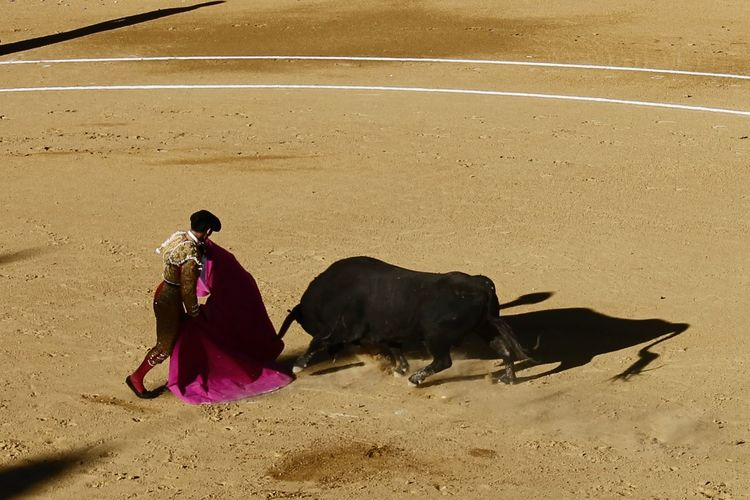High Angle View Of Bullfighter Luring Bull
