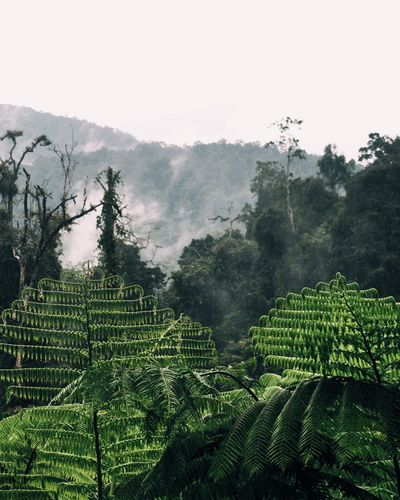 Pleasant view for eyes Agriculture Growth Tree Nature Green Color Beauty In NatureThe Week On EyeEm Floral Photography Scenics Outdoors Landscape Plant Day Malaysia Fragility Mountain No People Rainforest Room Jungle Forest Photography Tropical Climate Tropical Beautiful Nature Fog Green Nature