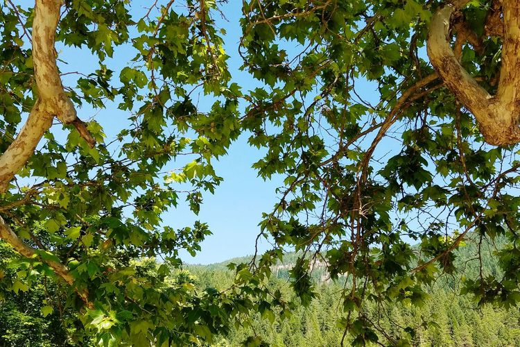 Green framed sky Taking Photos Nature's Diversities The Essence Of Summer
