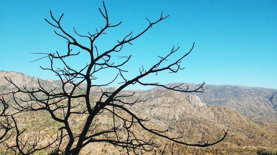 beauty in nature... Bare Tree Nature Bird Outdoors Day Sky No People