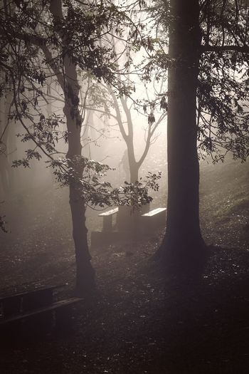 the trees and fog Trees Fog Mist Mountain Forest Nature Landscape Green Travel Destination Place Tranquility Serenity Silence Relaxing Backgrounds Wallapper Plant Tree Beauty In Nature Land Outdoors