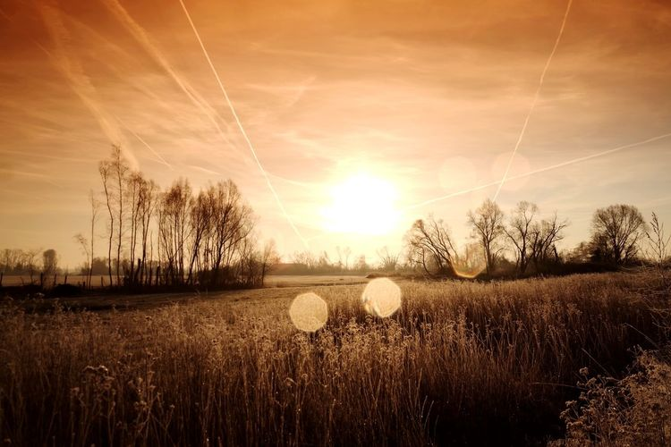 frozen world Frozen Nature Nature Photography Beauty In Nature Nature_collection My Point Of View Frozen Cold Temperature Cold Condition Cold Weather Landscape Sunrise Filter Hergershäuser Wiesen Frosty Tree Rural Scene Cereal Plant Backgrounds Gold Colored Field Sunlight Sun