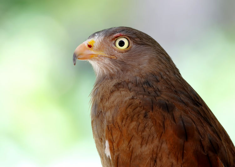 Close-Up Of Bird