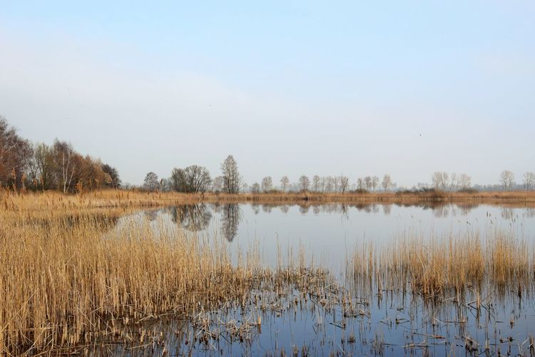 Linumer Teichgebiet Water Tranquility Tranquil Scene Scenics - Nature Plant Sky Lake Beauty In Nature Reflection Nature Grass Non-urban Scene No People Tree Growth Day Clear Sky Landscape Land Outdoors Swamp Naturelovers