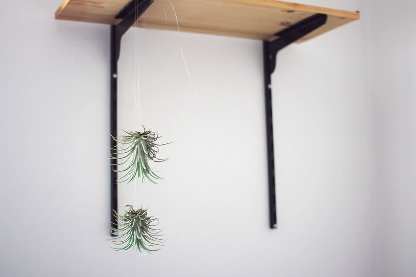 Day Minimal No People Plant Simple Tillandsia Beauty In Nature Tranquility