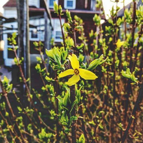 Yellow amidst a